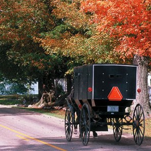 Amish Buggy in Lancaster